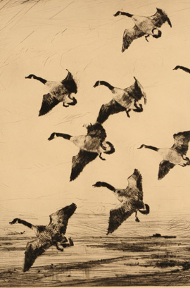 Frank Benson (1862-1951) Waterfowl Etchings